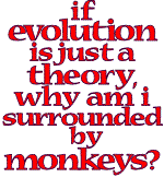 If evolution is just a theory, why am I surrounded by monkeys?